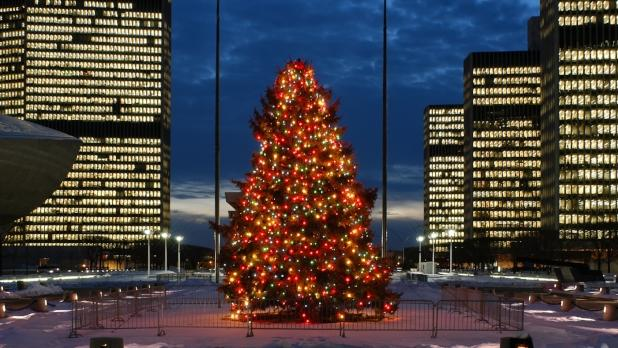 Empire State Plaza Tree - Photo Courtesy of Albany County Convention & Visitors Burea