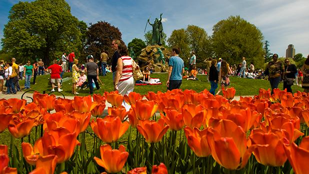 Albany Tulip Festival - Photo by Joe Elario