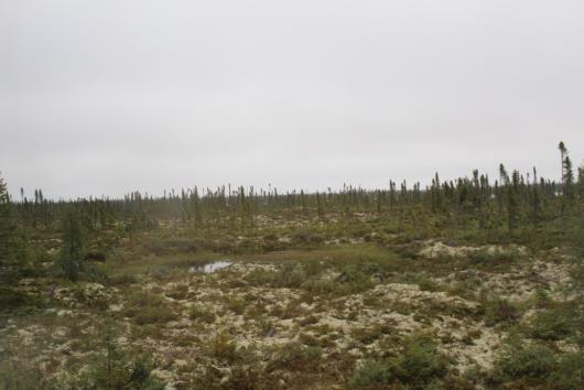 The alien terrain of the tundra