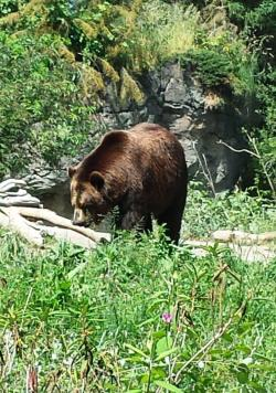 Sunny Day Adventure at Woodland Park Zoo in Seattle - Brown Bears