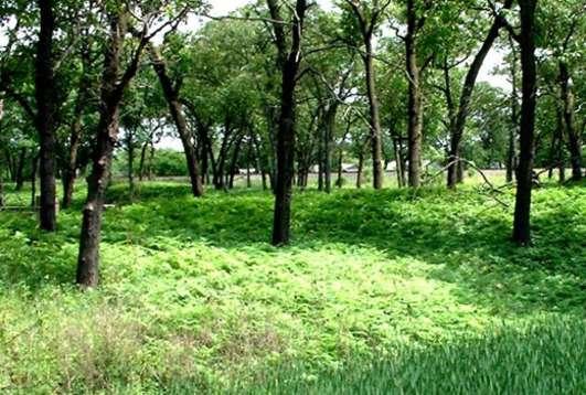 Miller Woods Hike