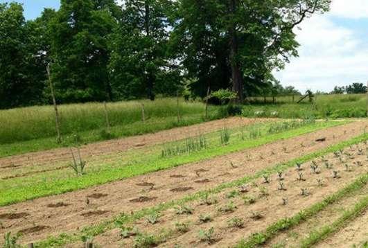 Gardening at Chellberg Farm