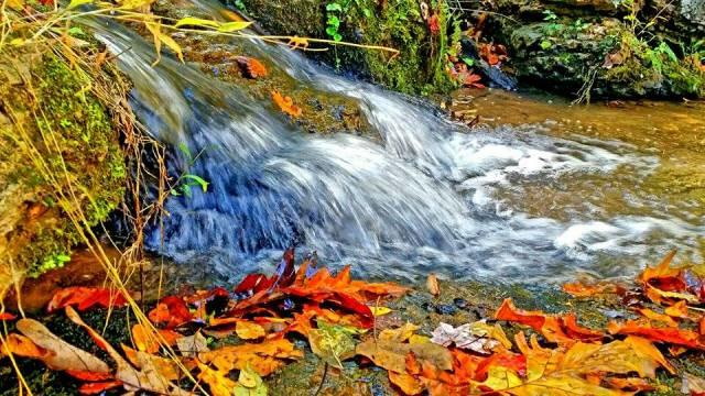Fall Water Stream - Fall Photo