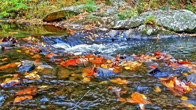 Fall Water Leaves - Fall Photo