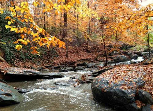 Dunwoody Nature Center Creek