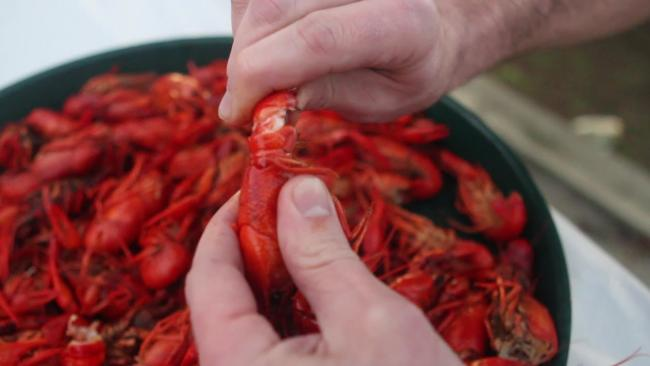 Video Thumbnail - youtube - How To Eat a Crawfish.mp4