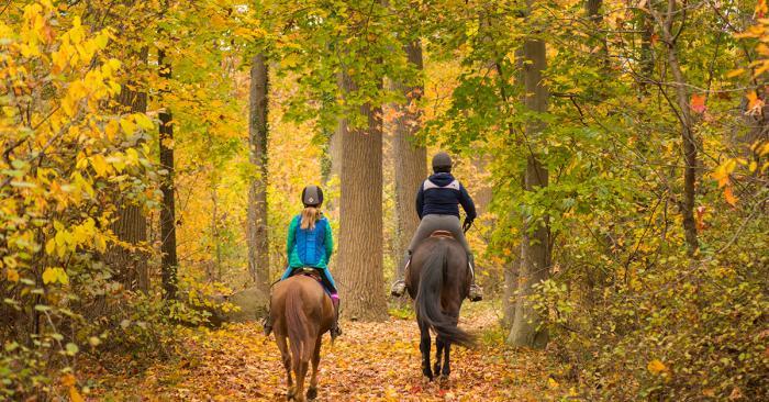 Bellevuew State Park Fall