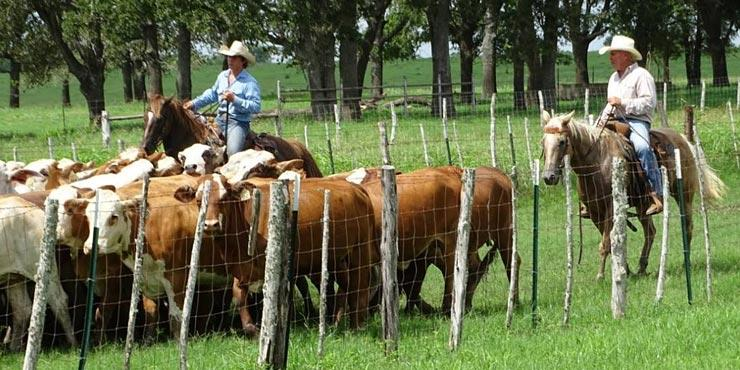 Cowboy Way 7D Ranch