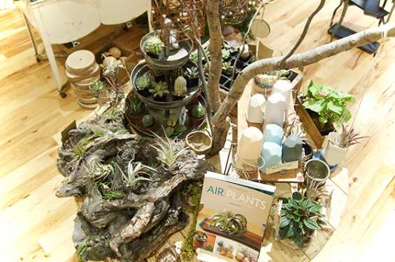 Airplant Table at Moss