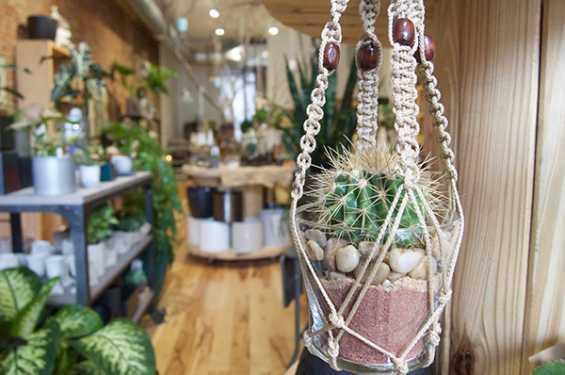 Macrame Cactus Hanger at Moss