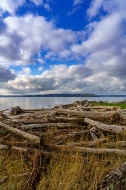 Driftwood and Picnic Tables at Saltwater State Park in Des Moines