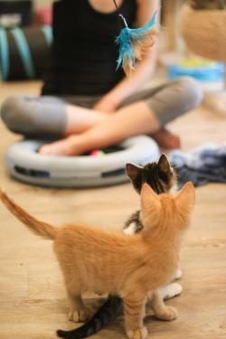 Cat Yoga Kittens