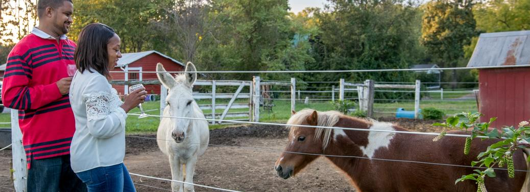 Working horse farm at The Inn at Westwynd Farm, Hummelstown, PA