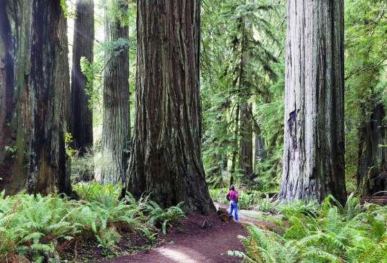 Best of California's Redwood Coast Itinerary