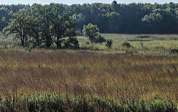 UW-Madison Arboretum Walk: Prairies and Savannas on the Grady Tract.