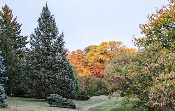 UW-Madison Arboretum Walk: The CCC and the Arboretum.