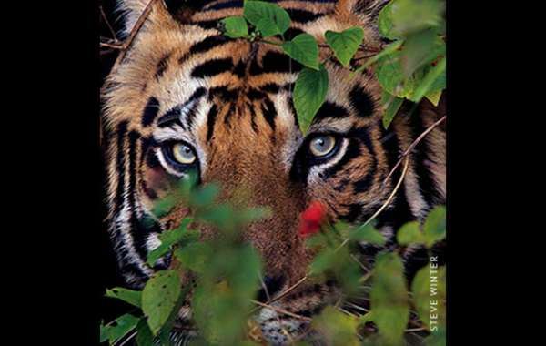 National Geographic Live - On the Trail of Big Cats