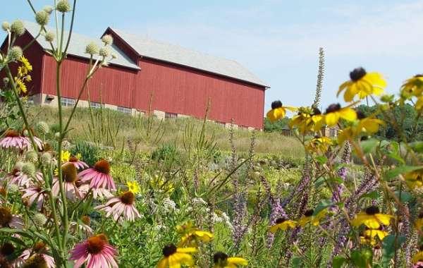 Prairie Blooms and Wisconsin Brews
