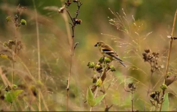 UW-Madison Arboretum Family Nature Program: Wetlands