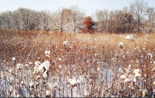 UW-Madison Arboretum Family Nature Program: All About Snow