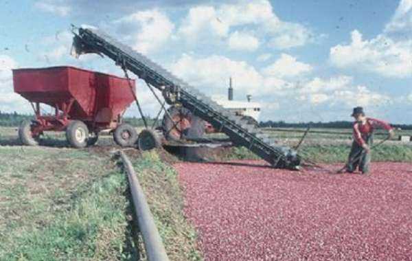 History Sandwiched In: Wisconsin Cranberry Discovery Center and the History of Our State's Official Fruit