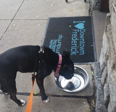 Downtown Frederick Dog Water Bowl
