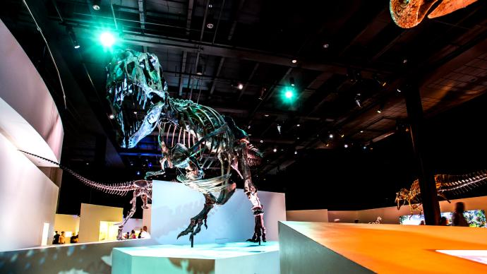 Tyrannosaurus Rex at Hosuton's Museum of Natural Science