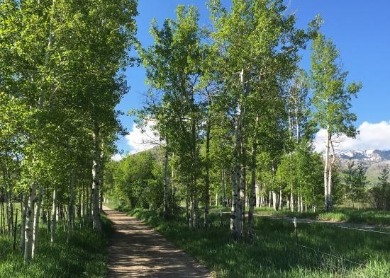 McLeod Creek Trail