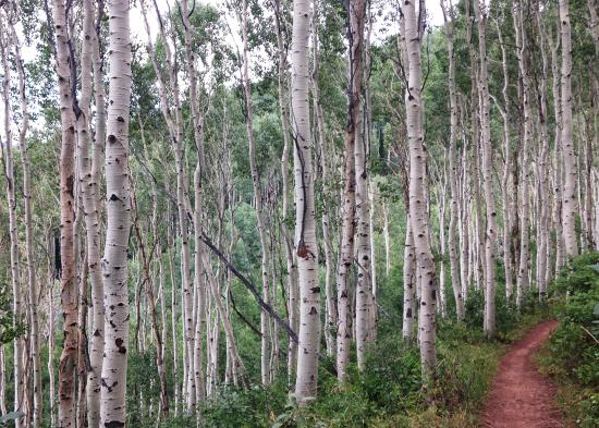 Mid Mountain Trail