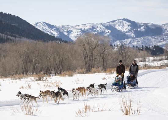 Dog Sledding -Blog
