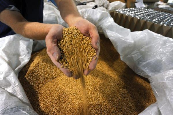 Copy of 100% Organic Soft Winter Wheat