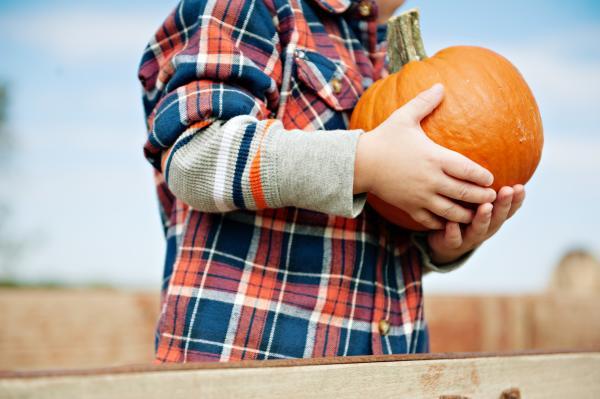Child holding small pumpkin at Barton Hill Farms