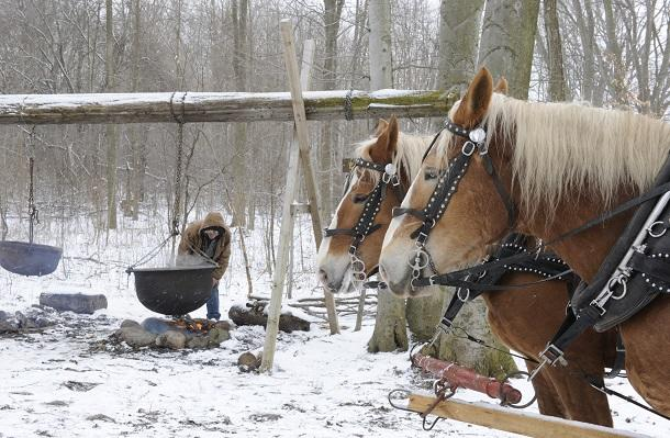 Fresh maple syrup tour with horses