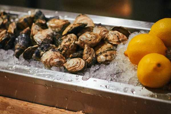WildTale Oysters