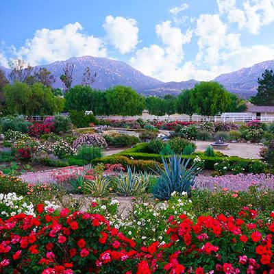 Rose Haven Heritage Garden