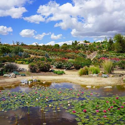 Rose Haven Heritage Garden Temecula