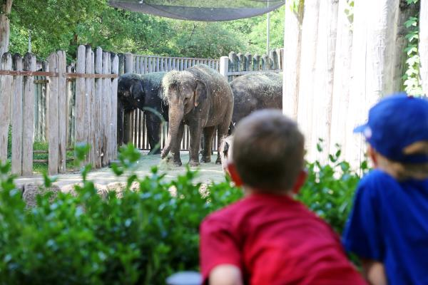 Fort Worth Zoo elephants kids