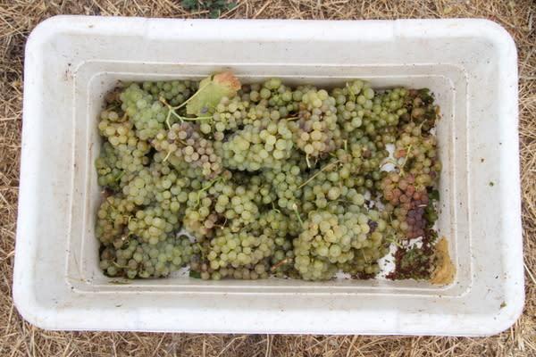 Mayo Harvest