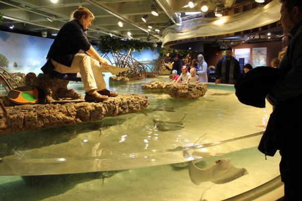 NEAQ shark tank