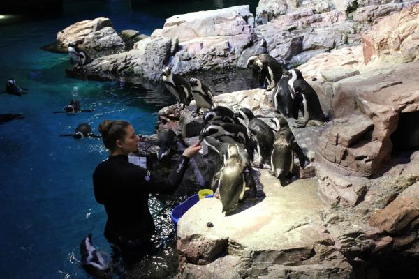 NEAQ Penguins