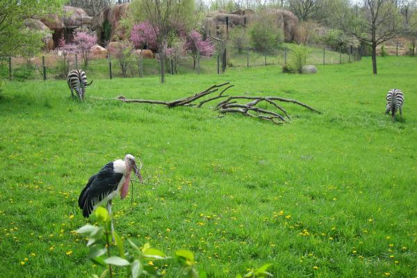 Fort Wayne Zoo Edgar stork