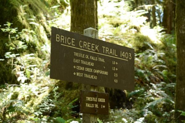 Brice Creek Trail Sign by Colin Morton