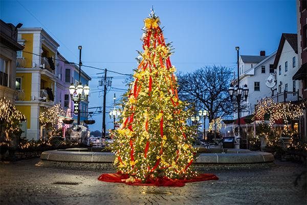 Federal Hill Tree
