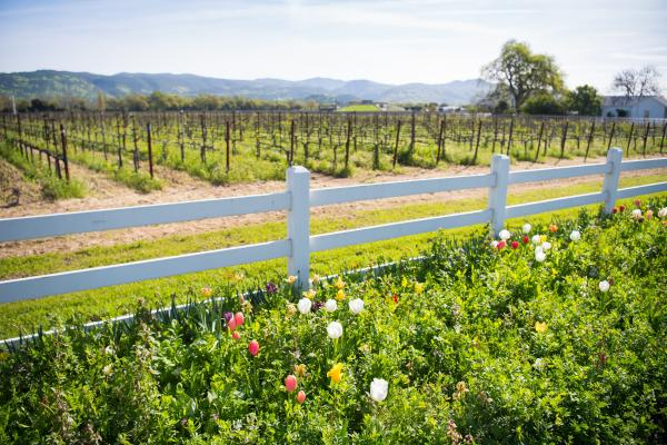 Spring at Nickel & Nickel in Napa Valley