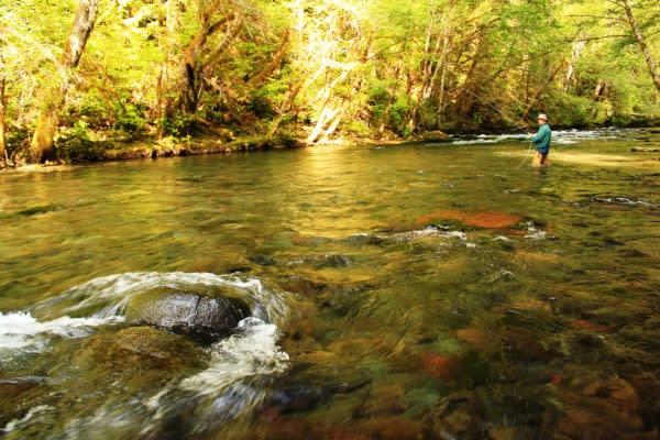 Fishing Near McKenzie Bridge by Greg Yamada
