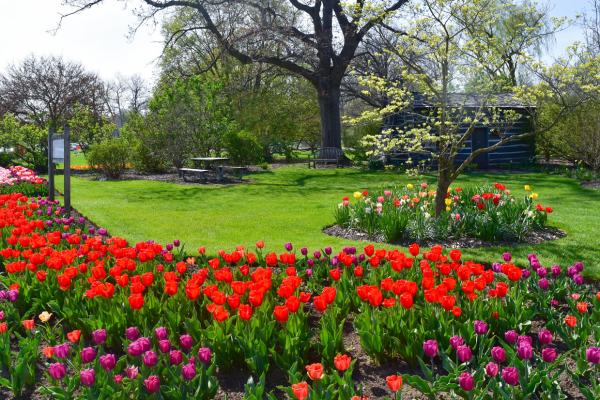 Foster Park in Spring