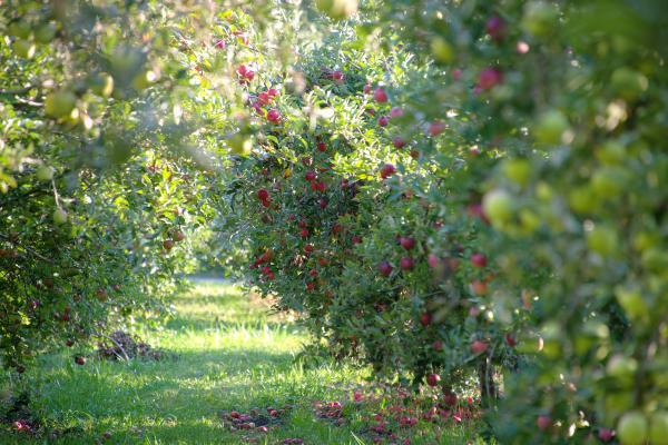 Cook's Apple Orchard - Fort Wayne IN