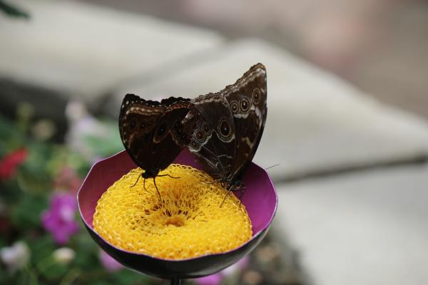 Butterflies sipping nectar