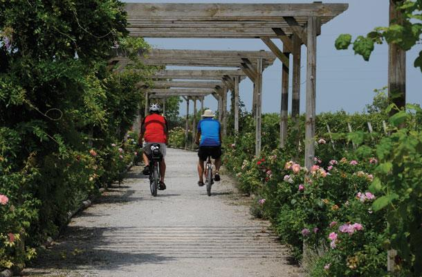 Pelee Island Pedal 3