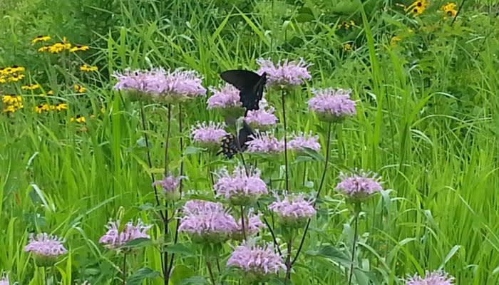 Burkhart Creek - Butterfly